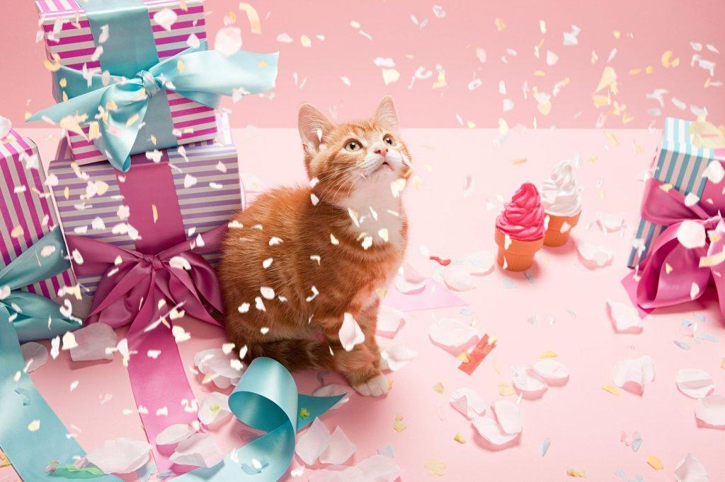 Картинки с котиками на день рождения, смешных